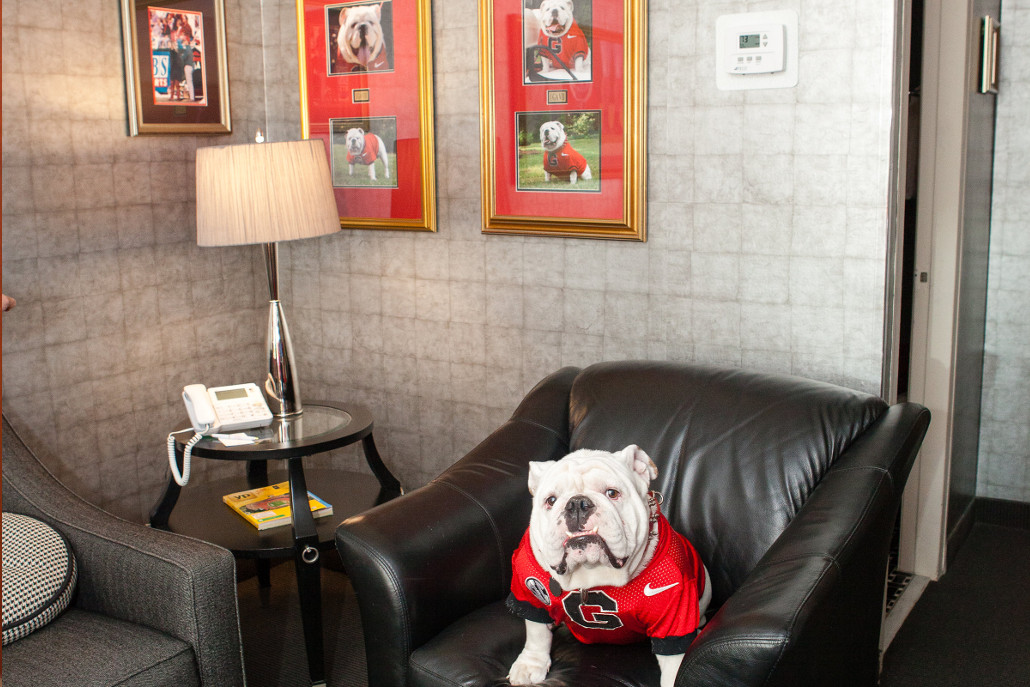 Uga X on Gameday at the Uga Suite in Athens, GA near Sanford Stadium